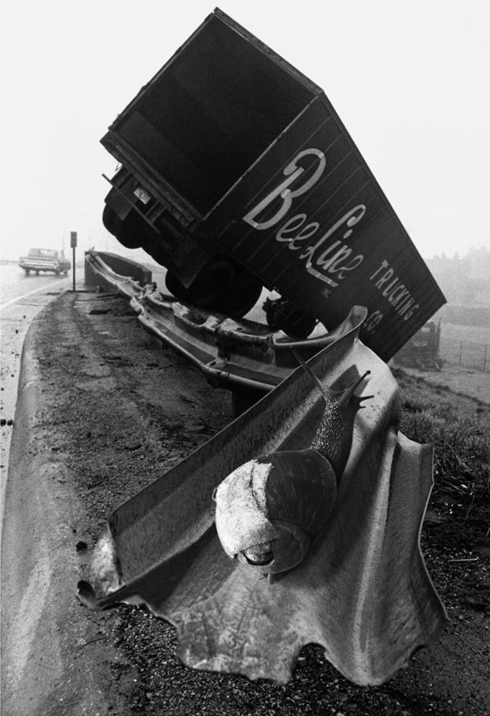 Bee Line Trucking