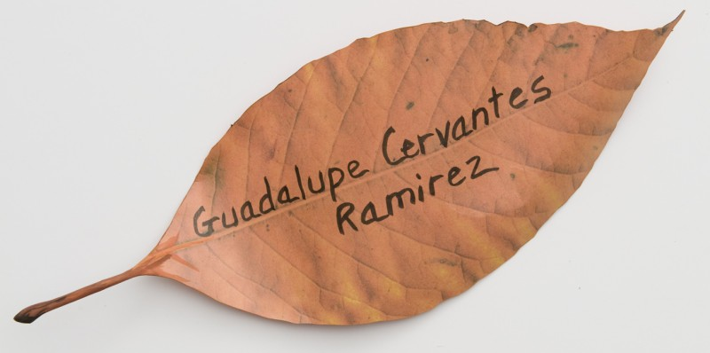 Detail of Fallen, Guadalupe Cervantes Ramirez, 26, died in Camp Arifjan, Kuwait on April 23, 2008